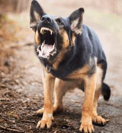 Barking 2